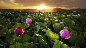 [AUDIO] Gặt quả trước gieo nhân sau theo đúng luật nhân quả