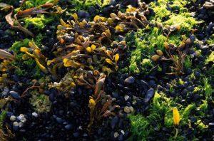 Rong biển có thể là giải pháp làm sạch hành tinh và giải quyết vấn đề biến đổi khí hậu
