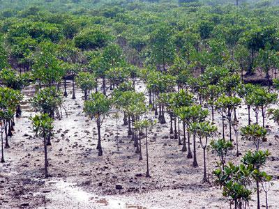 Thế nào là sự phát triển bền vững?